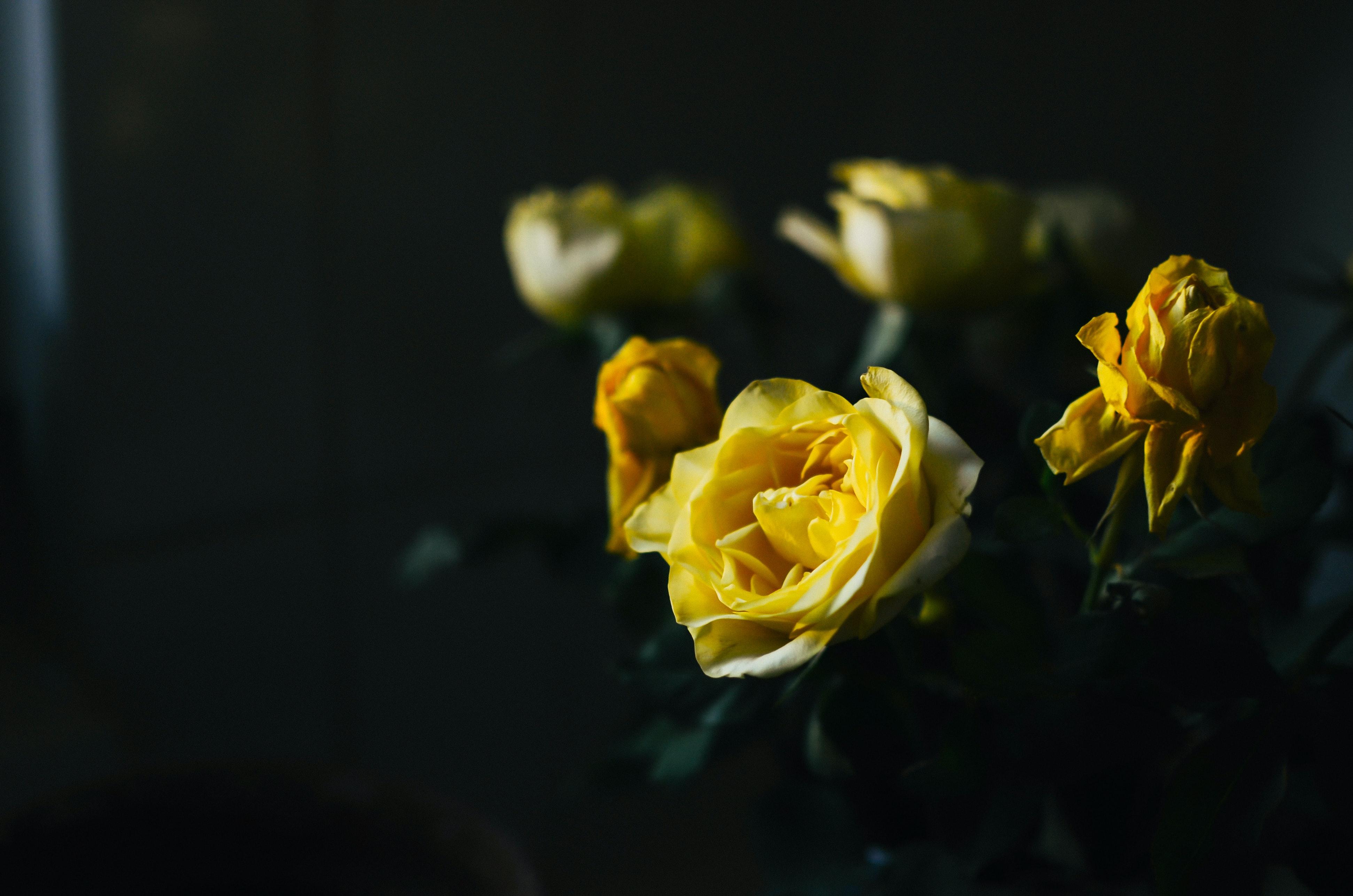 Anyák napja, sárga rózsák - jó lenne elmondani mindent, amit még nem tudtam